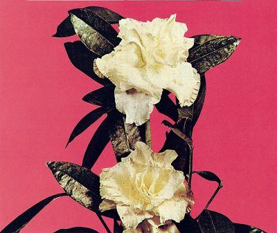 Dos Gardenias CD cover