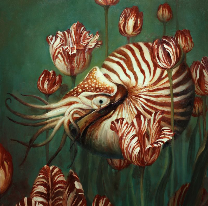 Nautilus by Martin Wittfooth