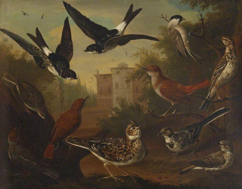 British Birds by Charles Collins