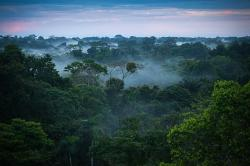 Brazilian Amazon rainforest