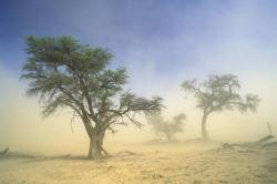 Kgalagadi Transfrontier Park by Nigel Dennis