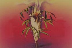 Bob Marley's Kaya album sleeve