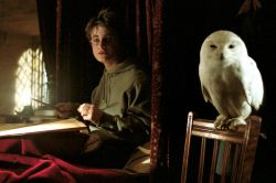 Daniel Radcliffe as Harry Potter with his owl Hedwig