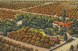 Florida orange grove as seen from the air